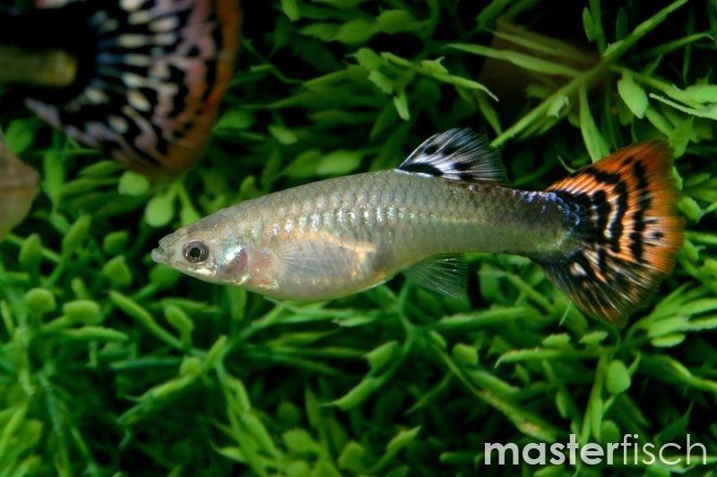 Viele Erfahrungen aus der Fischdatierung Speed-Dating in ocala fl