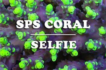 Corals (WYSIWYG)