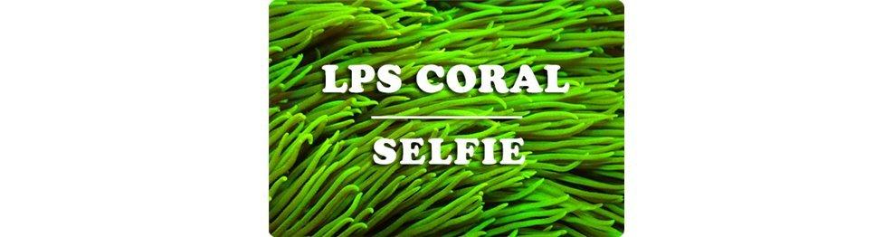 LPS Corals (WYSIWYG)